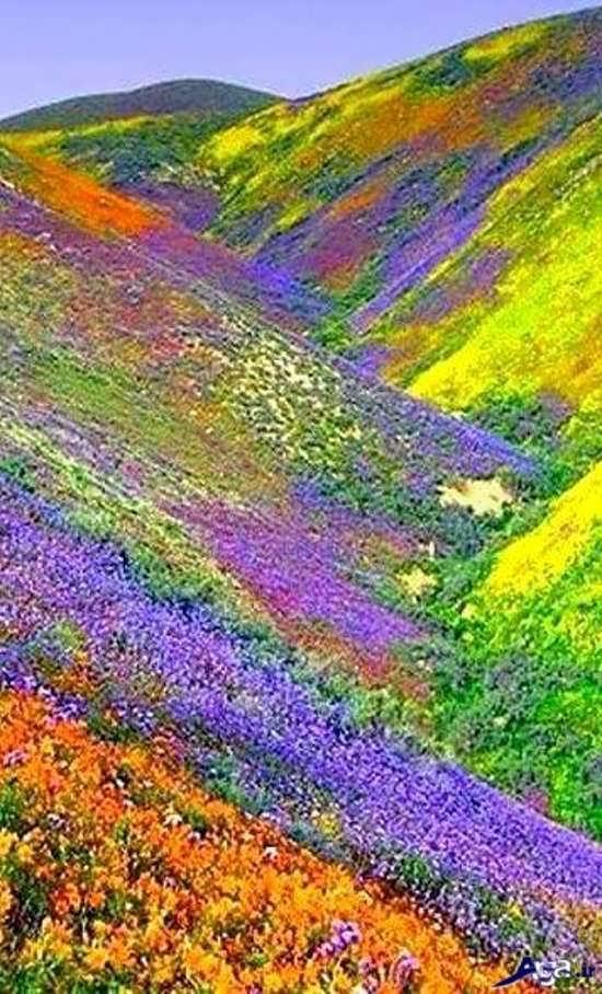 عکس منظره زیبا در هند