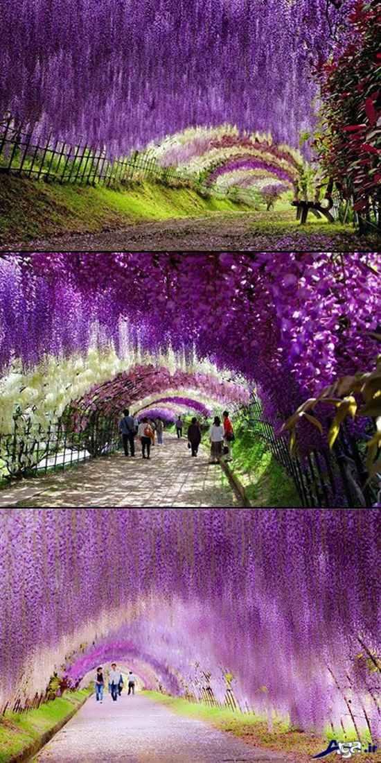 مناظر زیبای طبیعت در دنیا