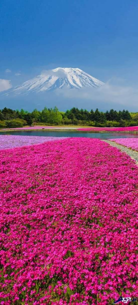 طبیعت زیبا در ژاپن