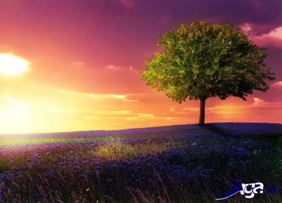 غروب خورشید یکی از مناظر در فصل بهار