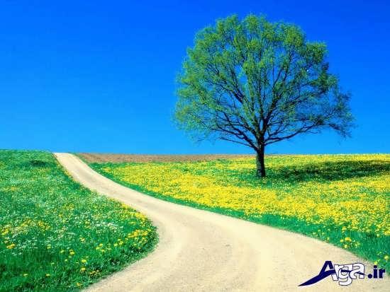 آرامش در طبیعت زیبای بهار