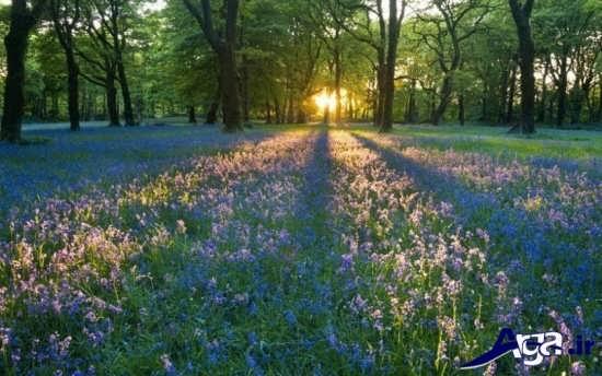 عکس های طبیعت بهاری با منظره طلوع خورشید بسیار زیبا