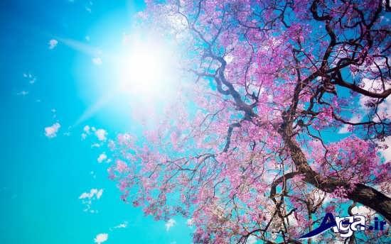 آسمان آبی و قشنگ بهاری