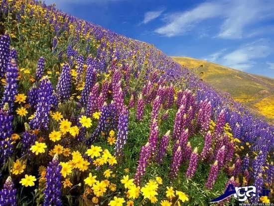 ترکیب و تلفیق گلهای زرد و بنفش در این عکس