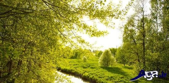 طبیعت سر سبز بهاری