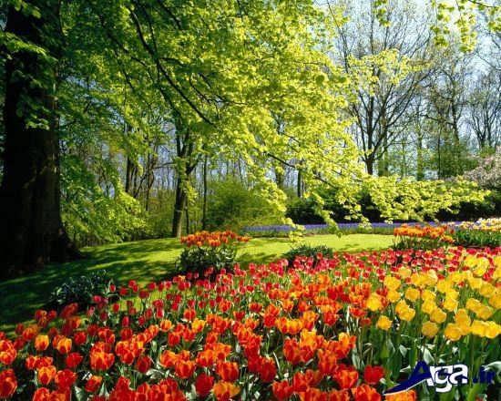کارت پستال و عکس زیبا از فصل بهار