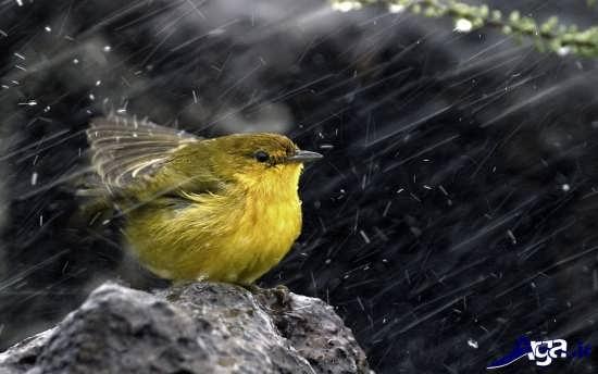 عکس زیبای بارانی