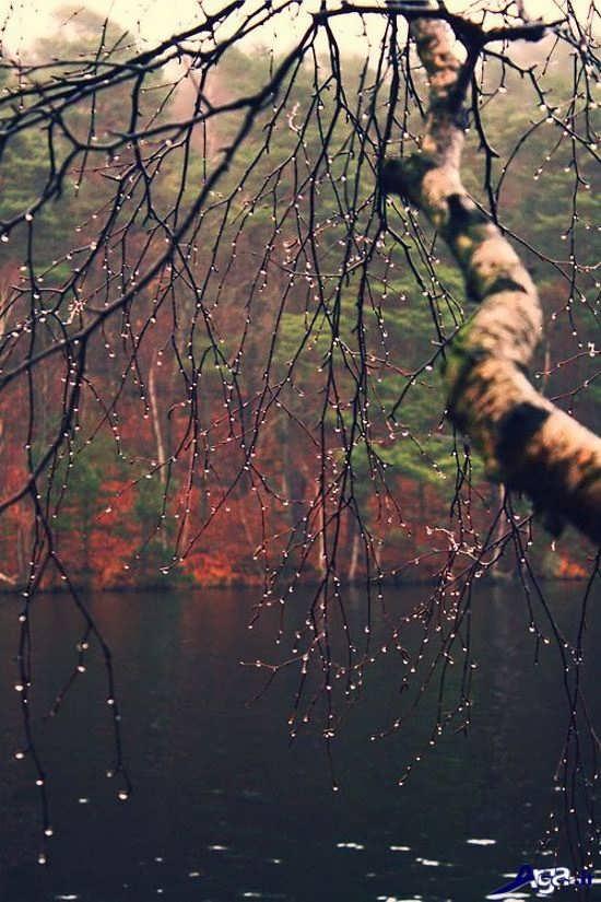 بهترین عکس های باران