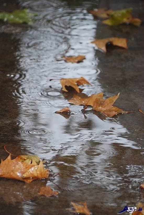 عکس زیبای باران پاییزی