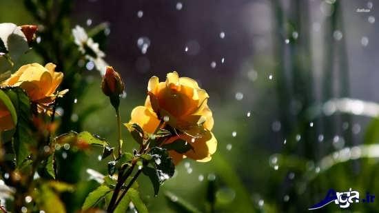 طبیعت بارانی