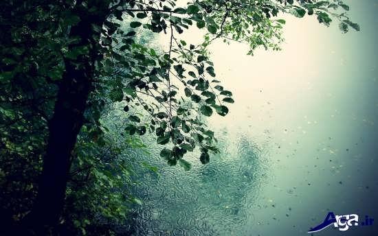 طبیعت بارانی بسیار زیبا