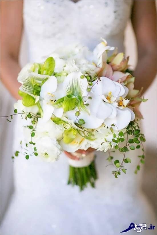 دنیای گلهای ارکیده