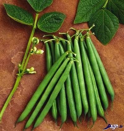 لوبیا سبز جزء سبزیجات پر خاصیت