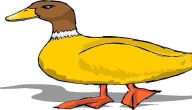 نقاشی اردک برای رنگ آمیزی کودکان