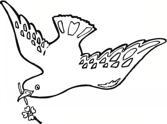 رنگ آمیزی و نقاشی کبوتر برای کودکان