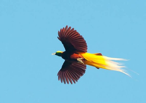 عکس پرنده های بهشتی