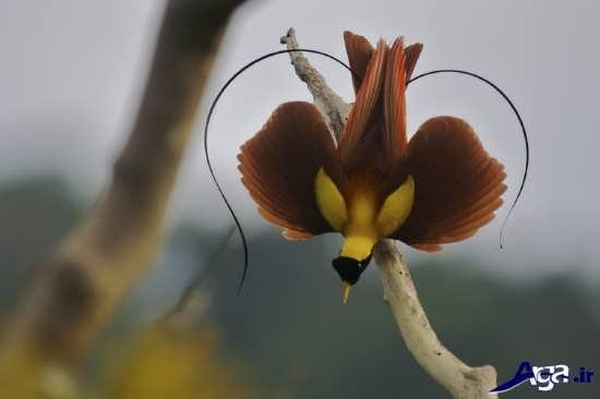 عکس پرنده بهشتی بسیار دیدنی