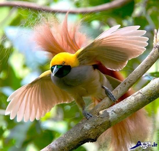 عکس پرنده های بهشتی زیاب و بسیار جذاب