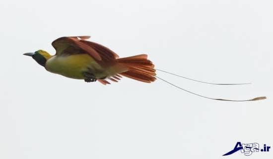 پرنده بهشتی زیبا و دیدنی