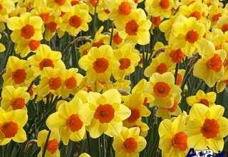 نمایی از گلهای رنگارنگ و قشنگ در یکی از عکس های طبیعت بهاری