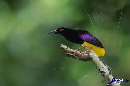 عکس پرنده های بهشتی زیبا و عجیب