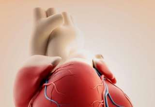 مراحل تشکیل قلب جنین