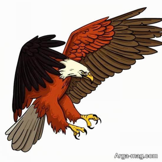 رنگ آمیزی عقاب