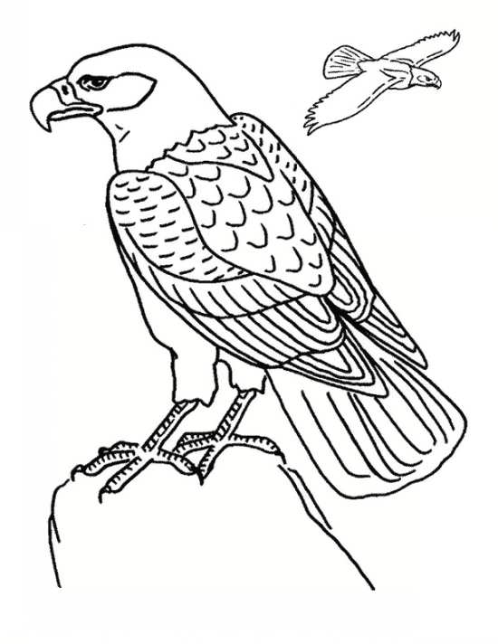 نقاشی عقاب زیبا