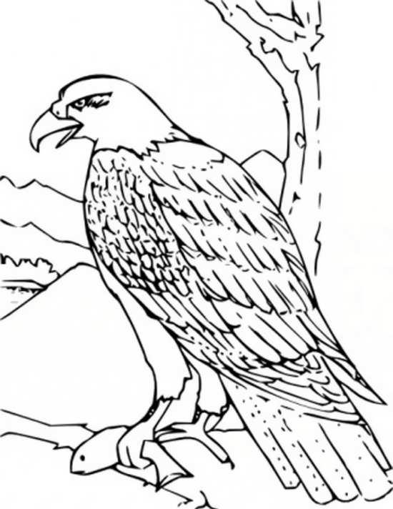رنگ آمیزی کودکانه عقاب
