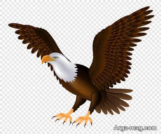 نقاشیهای عقاب زیبا