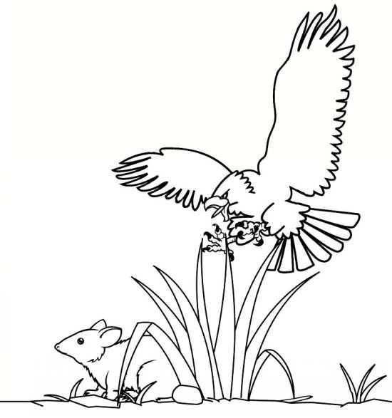 نقاشی خرگوش و عقاب