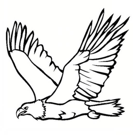 نقاشی پرنده عقاب