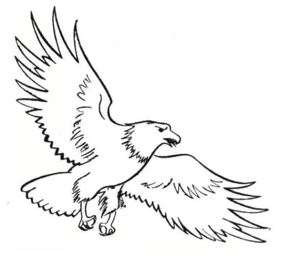 نقاشی جالب و زیبا عقاب