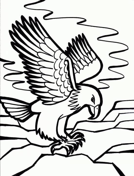 نقاشی پرنده عقاب با انواع رنگ آمیزی های جالب