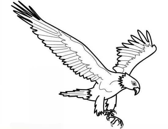 نقاشی کودکانه و جالب عقاب