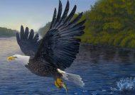نقاشی عقاب برای رنگ آمیزی کودکان