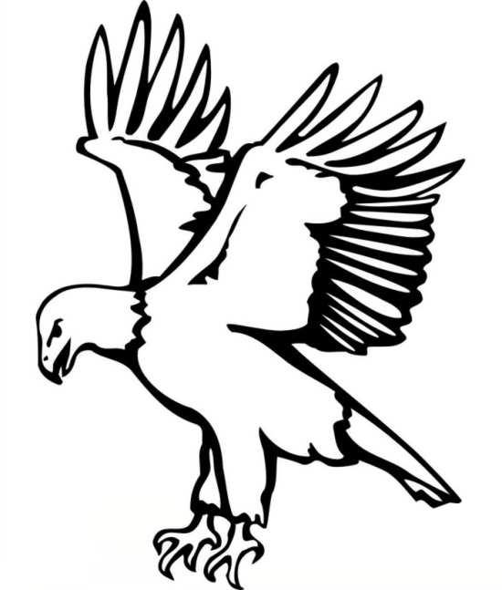 نقاشی زیبا و جالب عقاب
