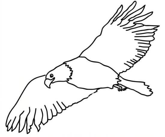 رنگ آمیزی عقاب برای بچه ها