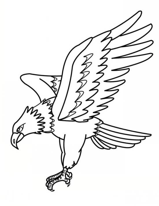 رنگ آمیزی کودکان عقاب