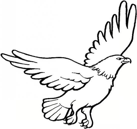 نقاشی عقاب با انواع رنگ آمیزی های مختلف