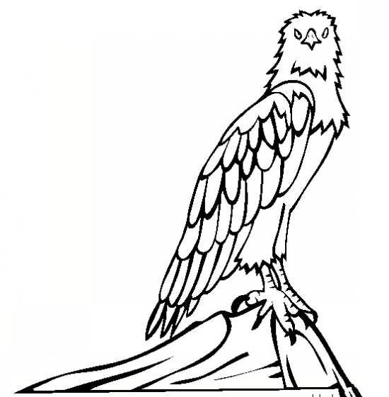 رنگ آمیزی عقاب با انواع نقاشی های جالب