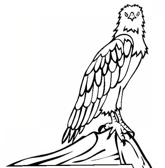 نقاشی زیبا و جذاب عقاب
