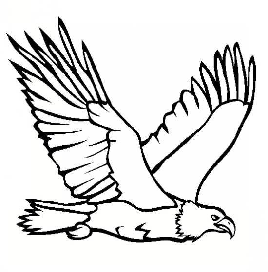 نقاشی جالب عقاب