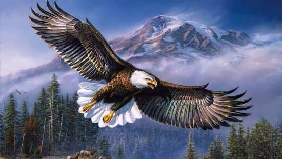 رنگ آمیزی زیبا و متفاوت عقاب