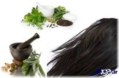 5 رنگ موی گیاهی برای موهای سفید