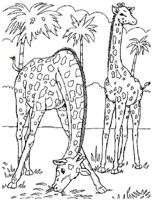 آموزش کشیدن نقاشی زرافه برای کودکان دختر و پسر