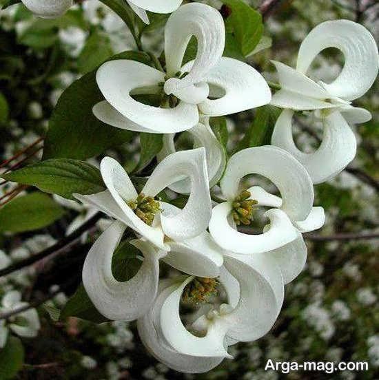 گل های شناخته نشده