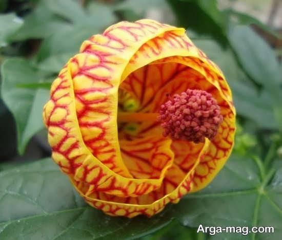 گل های عجیب و زیبا