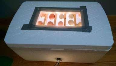 آموزش ساخت دستگاه جوجه کشی در منزل