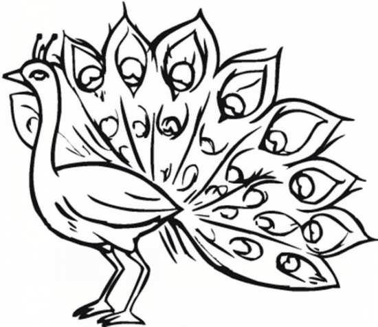نقاشی شیک و جالب طاووس